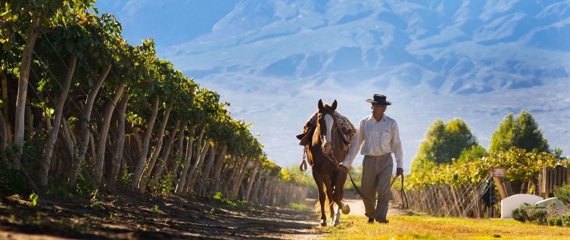 Masterclass - Argentina e seus Grandes Vinhos