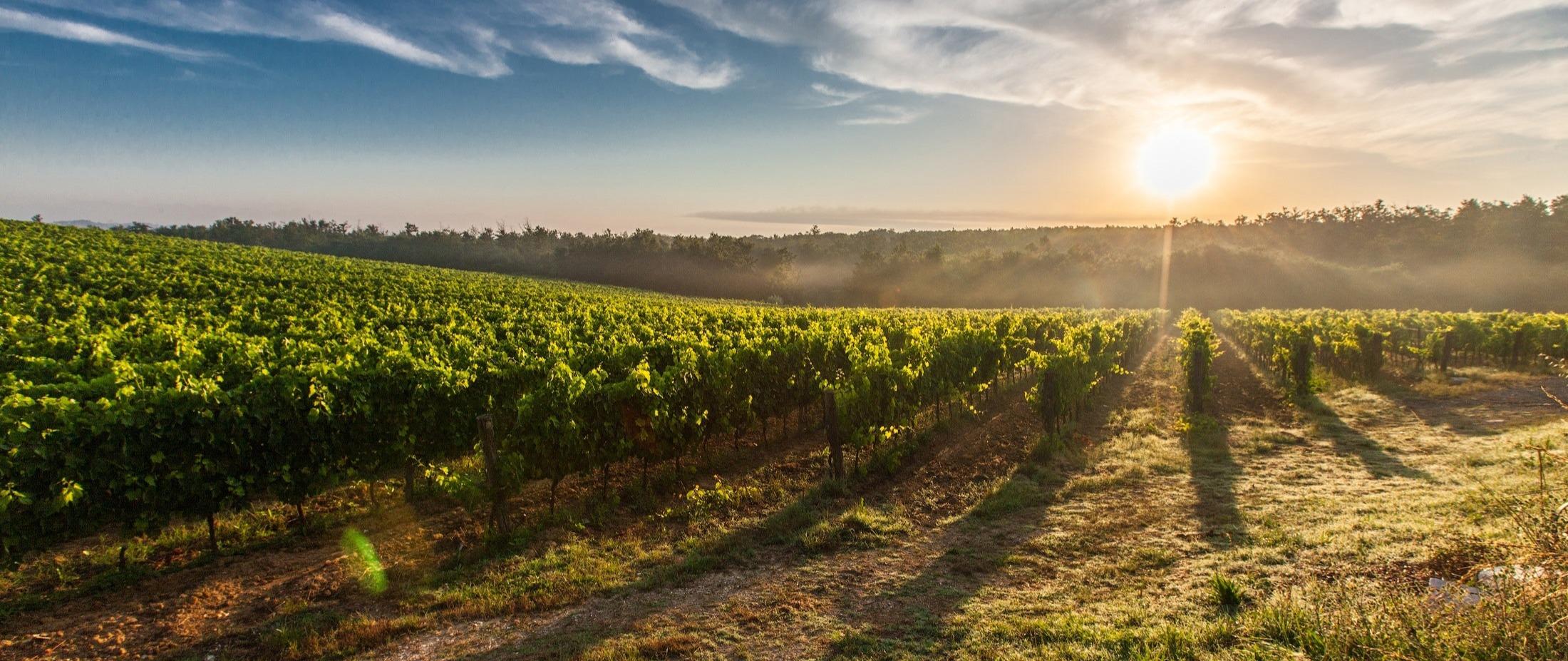 Masterclass - Chile e seus Grandes Vinhos
