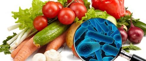 Segurança Alimentar  e Nutricional Social