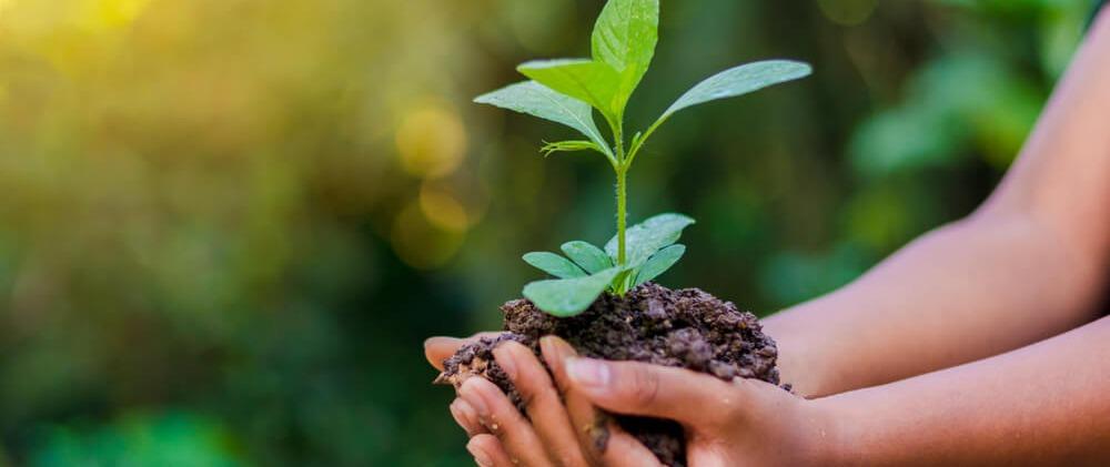Desenvolvimento Sustentável e suas Implicações para o Futuro do Planeta.