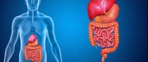 Doenças do Aparelho Digestório e Simbiose