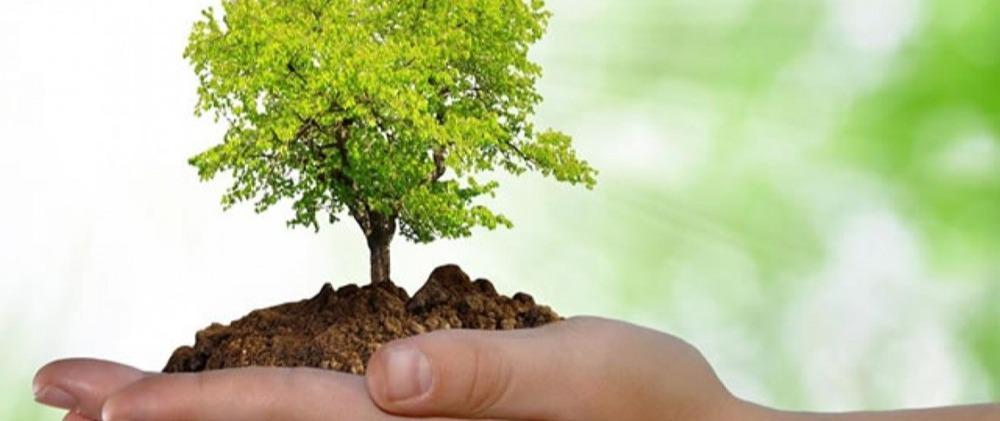 A norma NBR ISO 14001:2015 - Os requisitos de um Sistema de Gestão Ambiental