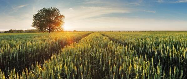 Qualificação Profissional em Agropecuária